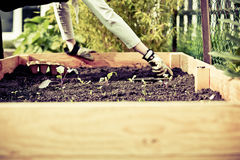 Bio cultivo de jardinagem urbano Foto de Stock Royalty Free