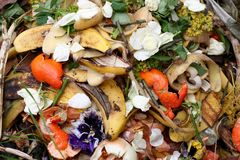 Bio-déchets frais Image libre de droits