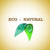 Bio diseño natural Foto de archivo