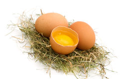 Bio eggs Stock Image