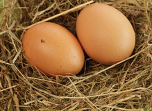 Bio eggs Royalty Free Stock Images