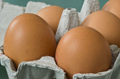 Bio eggs Stock Images