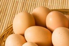 Bio eggs Stock Image