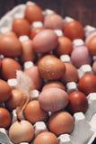 Bio-Eier im Behälter Stockbilder
