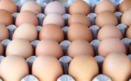 Bio-Eier im Eikasten Stockfotos