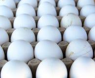 Bio-Eier im Eikasten Stockbild