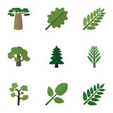 Bio ensemble d'icône plate d'arbre, de jungle, de feuille d'acacia et d'autres objets de vecteur Inclut également l'acacia, feuil Photos libres de droits