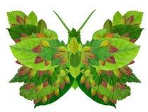 Bio- farfalla verde fotografia stock