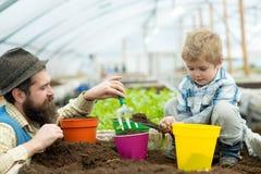 Bio- fertilizzante il padre ed il figlio hanno messo nel bio- fertilizzante del suolo bio- produzione del fertilizzante produzion immagine stock libera da diritti