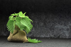 Bio- foglie di erbe dell'ortica fresca fotografia stock libera da diritti