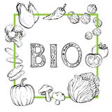 Bio fondo con las verduras a mano, blancos y negros ilustración del vector