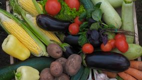 Bio food. Garden produce and harvested vegetable. Fresh farm vegetables in wooden box.  stock footage