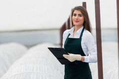 Bio food production. Female researcher technician studying with clipboard and gloves, dressed in office clothes,office shirt and apron in all withe greenhouse stock photography