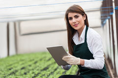 Bio food production. Female researcher technician studying with a tablet and gloves, dressed in office clothes,office shirt and apron in all withe greenhouse Royalty Free Stock Photography