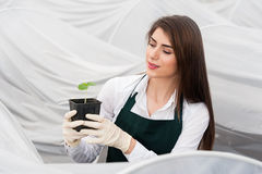 Bio food production. Young woman working in a greenhouse holding a crate with seedlings in a greenhouse royalty free stock image