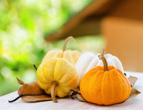 Pumpkins on rural landscape background Royalty Free Stock Photos