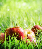 Red apples on green grass Stock Images