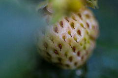 Bio- fragola verde fotografie stock