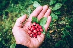Bio fresas de la fruta estacional en una imagen de moda del estilo de la mano del hombre imagen de archivo libre de regalías