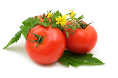 Bio fresh tomatoes Royalty Free Stock Photography