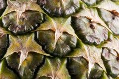 Bio- frutta dell'ananas fotografia stock libera da diritti