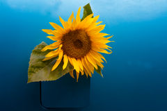 Bio-fuel concept. Sunflower growing out of a vehicle's gas tank symbolizing the concept of bio-fuel Stock Image