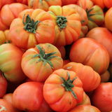 Bio fundo dos tomates Imagem de Stock Royalty Free