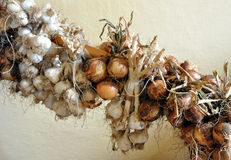 Bio garlic and onions Royalty Free Stock Images