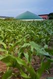 Bio gas plant in a maize field Stock Image