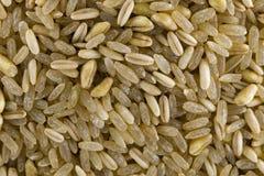 Bio grains de préparation de céréale Images libres de droits