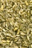 Bio grains de préparation de céréale Photos libres de droits