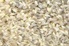 Bio grains de riz Photographie stock libre de droits