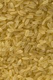 Bio grains de riz photo stock