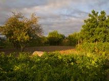 Bio jardín por la mañana Fotos de archivo
