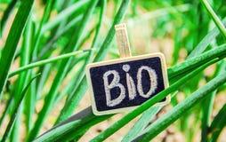Bio jeune oignon vert Photographie stock libre de droits