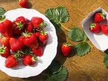 Bio jordgubbar på tabellen Royaltyfria Bilder