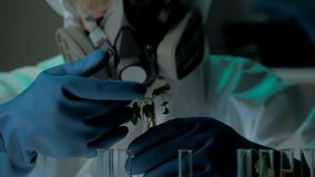 Bio laboratory experiment with germ of GMO`s plant. Scientist in protective mask and gloves adds nutrient solution into stock video