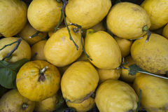 Bio lemons. Yellow Bio lemons , the famous: limone di sorrento Stock Photos