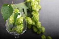 Bio- luppolo della birra fotografie stock libere da diritti
