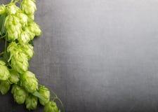Bio- luppolo della birra immagine stock