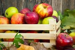 Bio maçãs na caixa de madeira Fotos de Stock Royalty Free