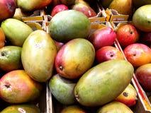 Bio mango fruit. Collected Royalty Free Stock Photo