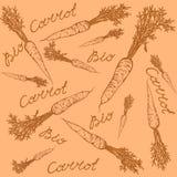 Bio modèle de carotte illustration libre de droits