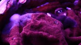 Bio- muffa fotografia stock libera da diritti