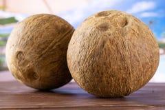 Bio- noce di cocco fresca sulla vocazione fotografia stock libera da diritti