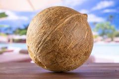 Bio- noce di cocco fresca sulla vocazione fotografia stock