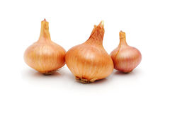 Bio onion isolated on white background Royalty Free Stock Images