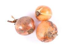 Bio onions Stock Photo