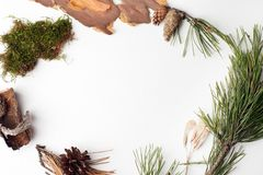 Bio- organicframe naturale dai deteails della foresta su fondo bianco, ecologico, ecologia, idea creativa di giorno di terra, spa immagini stock libere da diritti