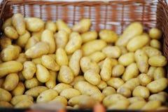Bio- patate sane fresche immagine stock